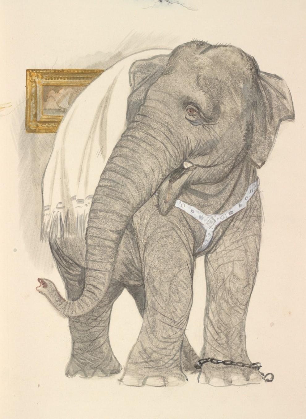 рисунки из рассказа слон два метода нанесения